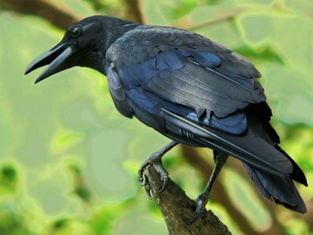 crow1207